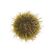 Green Urchin Management Areas Remaining Quota Report